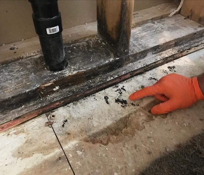 Mold Remediation with reconstruction Before