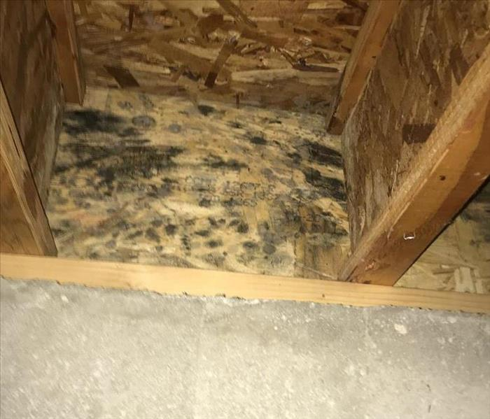 Mold growth inside wall.