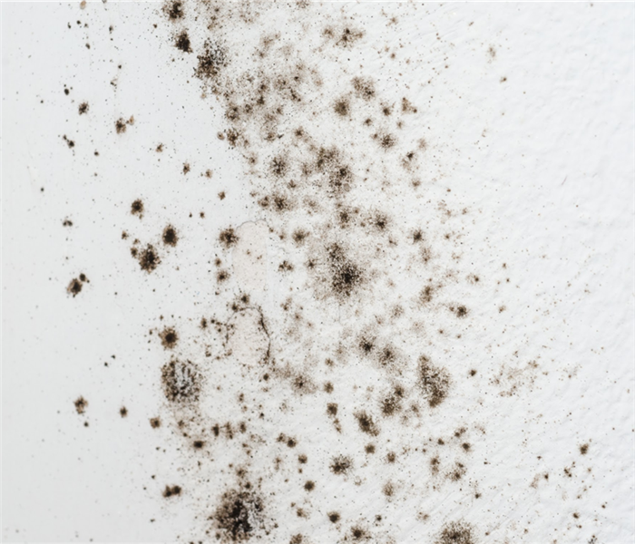 Black mold growth on white wall